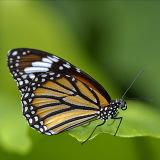 Nella casa delle farfalle